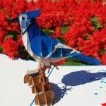 lovedup-blue-jay-bird